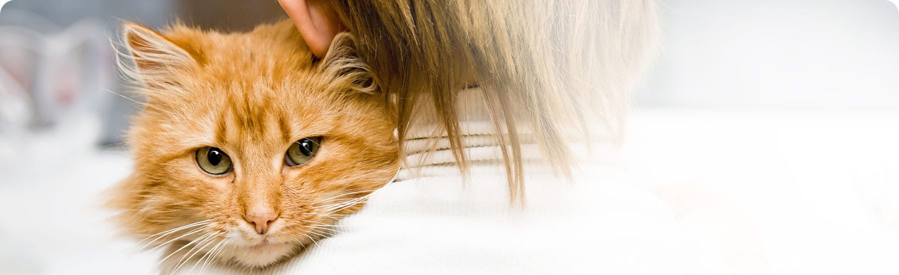 Feline Health Must Haves