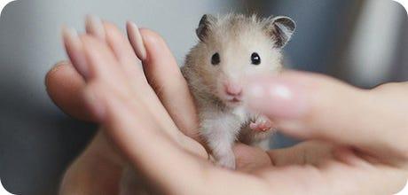 Small Pet Food
