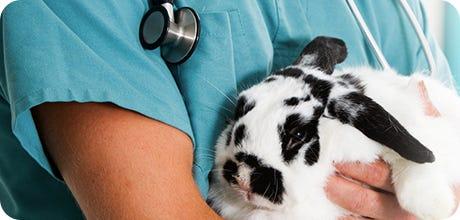 Small Pet Prescriptions